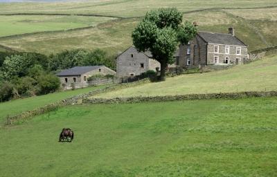 Farm Near Hayfield