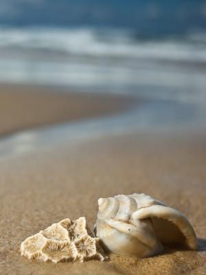 Shells_on_the_beach-11_double