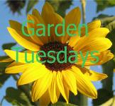 gardentuesdaysbuttonforffr[1]