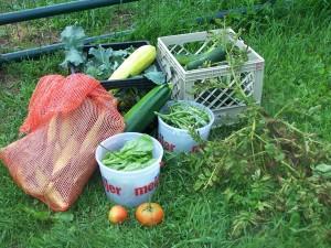 Garden Pictures 039